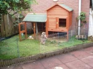 buitenhok konijnen